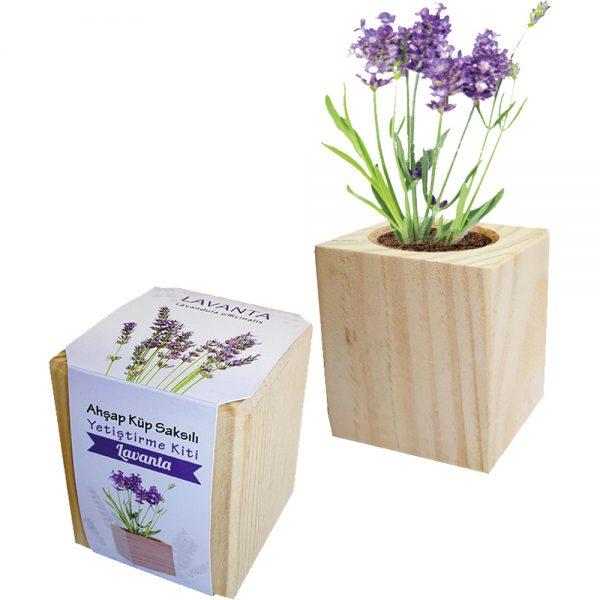 CK-2004-Lavanta Çiçek ve Ağaç Fidanları